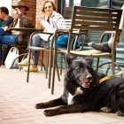 Dog-Friendly Spots in Edmonton